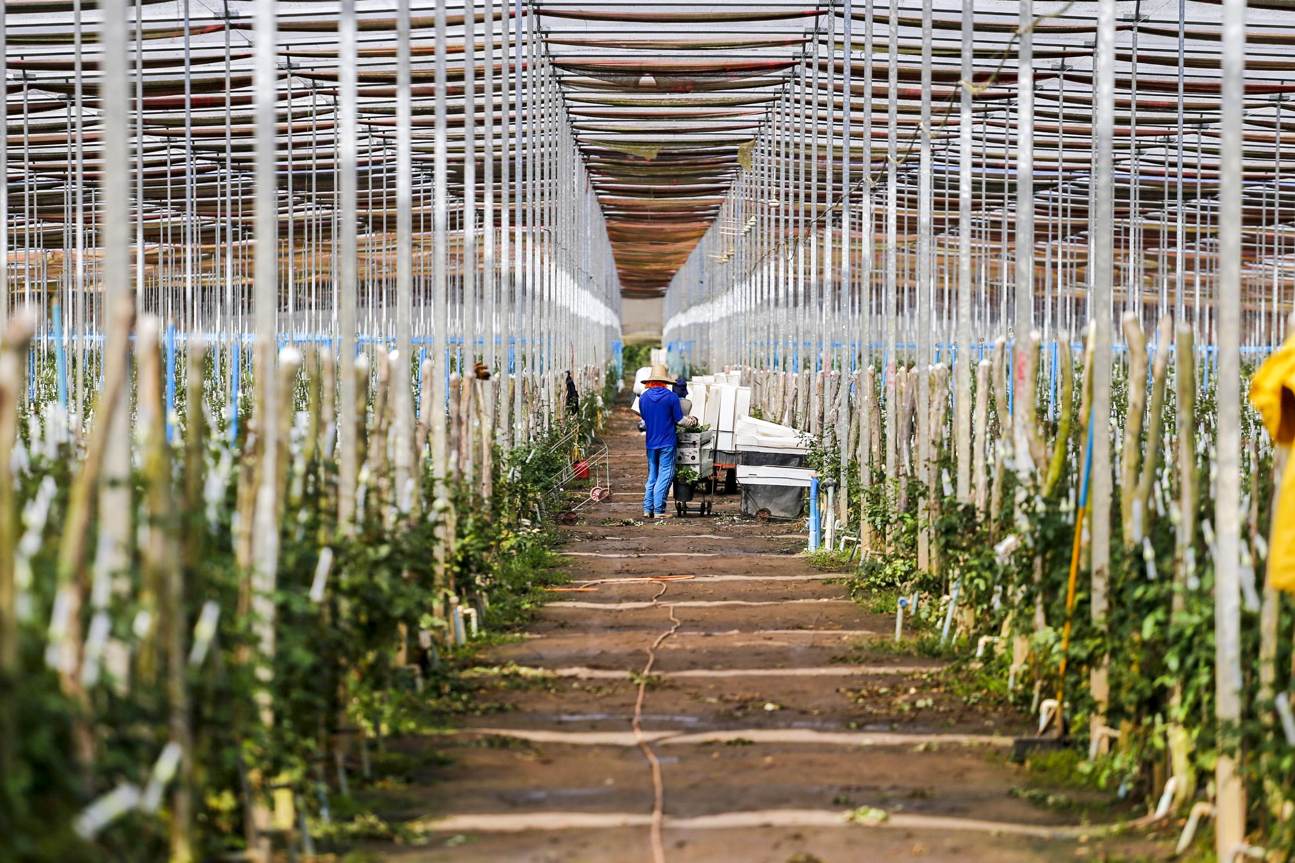 Com políticas públicas para o setor, Ceará se destaca como polo produtor de flores no Brasil