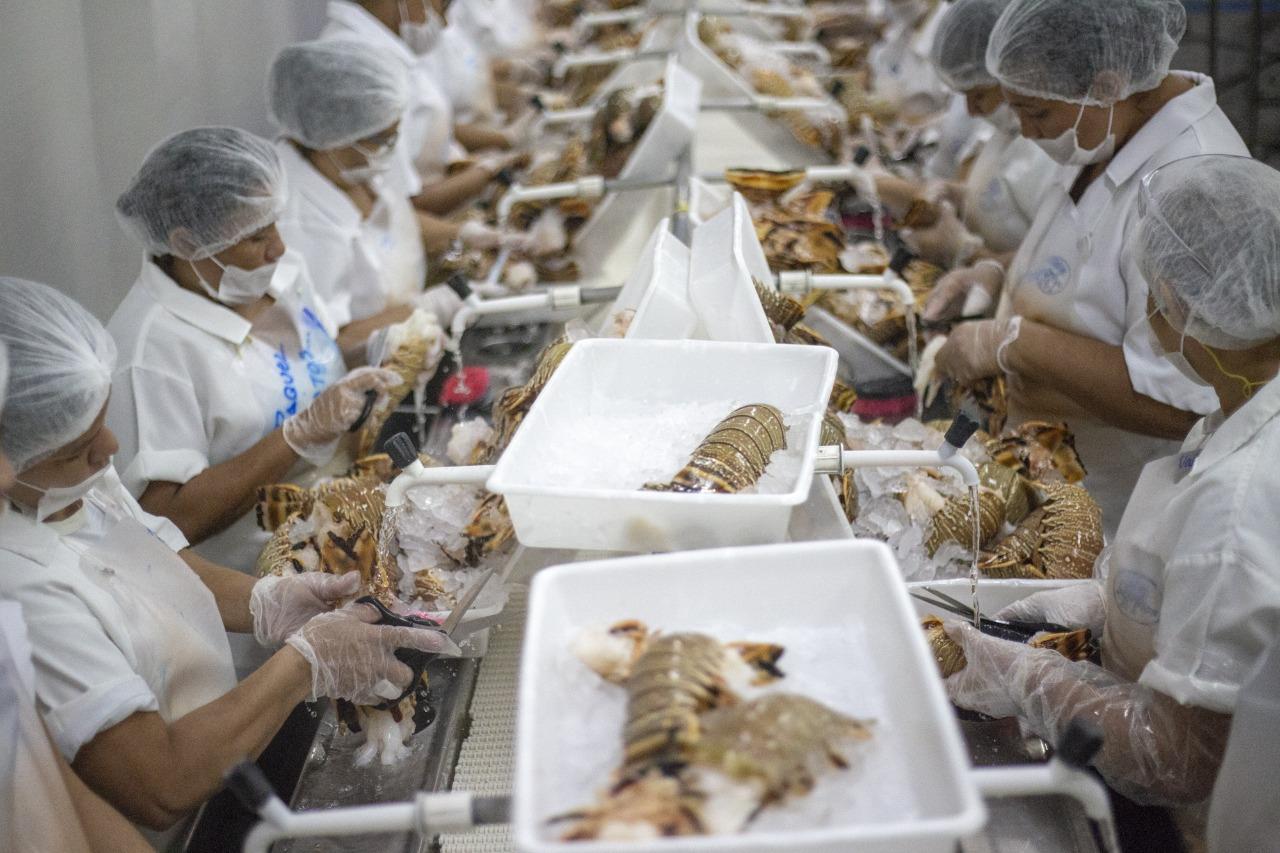 Ceará continua líder na exportação de pescado