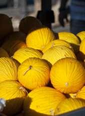Ceará se prepara para exportar melão para China