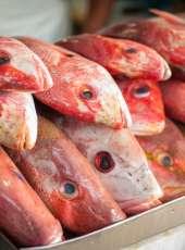 Resultado de análise em laboratório mostra que os pescados do Ceará não foram contaminados por óleo